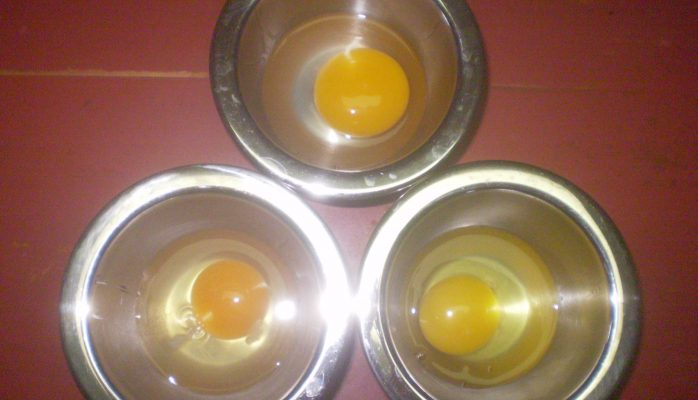Top: Duck; Bottom: HSE and GSE
