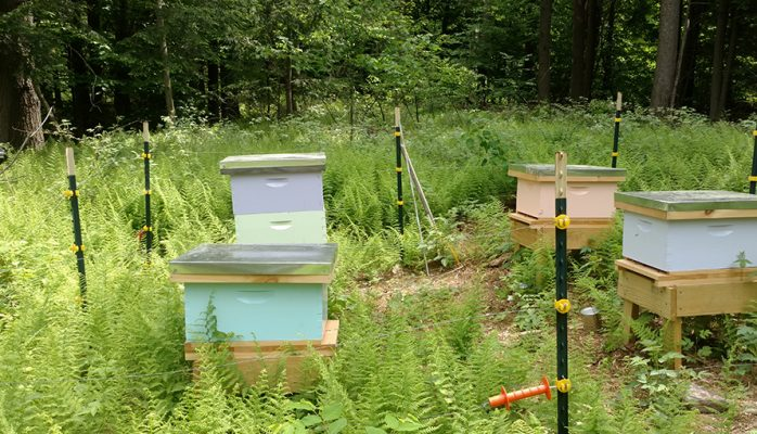 BeeYard honey bee hives pictures